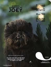 affenpinscher keychain 60 best affenpinscher images on pinterest animals dog breeds