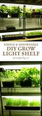 indoor vegetable gardening 37 edibles you can grow indoors in the