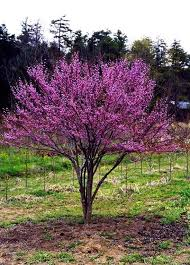 best trees to plant flowering trees for small shaded spaces