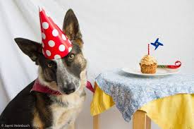 A Birthday Cake How To Make A Dog Birthday Cake Mnn Mother Nature Network