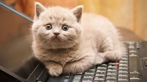 Cat Sitting Meme - why cats love sitting on keyboards
