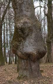 thick tree trunk with strange disease stock image image 85355319