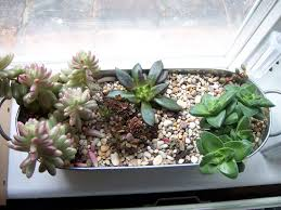 make yourself a fabulous outdoor succulent pan