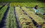 Agricultura biológica aumentou 20 vezes a área em apenas década e ...