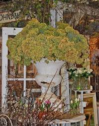 125 best nwfgs northwest flower and garden show images on