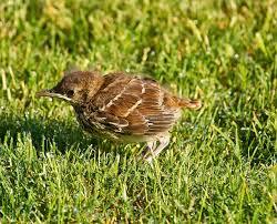 Orphaned 39 birds oklahoma nature blog