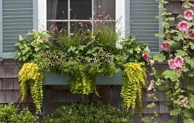 Flowers For Window Boxes Partial Shade - plant a better window box garden this old house