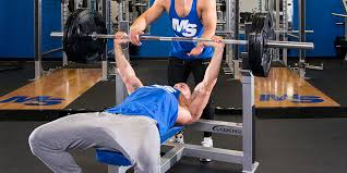 bench routines workout routines database 1000 free workout plans
