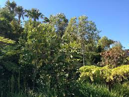 sydney native plants native gardens of the brand new barangaroo reserve u2013 janna
