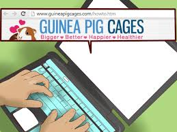 Cages For Guinea Pigs How To Pick A Cage For A Guinea Pig 14 Steps With Pictures