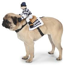 cute dog halloween costumes halloween costumes for pets archives horsing around in lahorsing