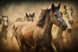 mustang horse free images creative stallion mane still life artwork