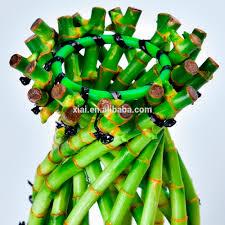 bambou feng shui marchandises en direct chanceux bambou pot de fleur tresses