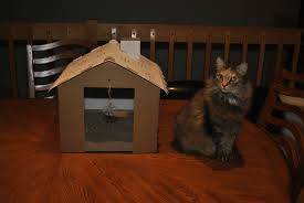 target hours mo arnold black friday tails from the foster kittens target gingerbread house cat