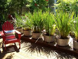potted grass plants landscape traditional with ornamental grass