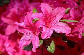 fleurs vivaces rustiques mon terrain est humide quelles plantes choisir