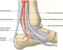 Os Calcaneus Ankle And Foot Clinical Gate