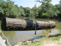 preserved underwater for more than a century sinker cypress logs