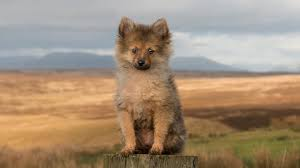 dog wallpapers lonely fluffy puppy dog wallpaper wallpaper studio 10 tens of