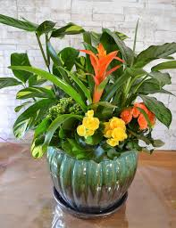 Flower Pot Irvine Florist Flower Delivery By Flower Synergy