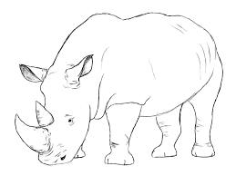 drawn head rhino pencil and in color drawn head rhino