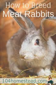 Air Conditioned Rabbit Hutch 43 Best Images About Rabbits On Pinterest Raising Compost And