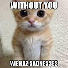 Sad Kitty Meme - super sad cat meme sad best of the funny meme