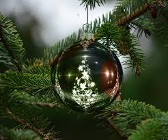 tree land christmas trees santa u0027s treeland tree farm