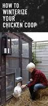 winterize a chicken coop 6 easy steps to keeping your chickens