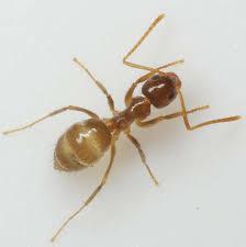 Small Black Flying Bugs In Bathroom Ants Exterminator U0026 Pest Controlhome Team Pest Defense