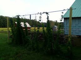 home trellis system community beeradvocate