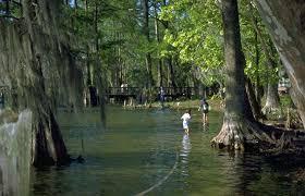 Louisiana lakes images Lakes beaches in cameron louisiana louisiana travel jpg