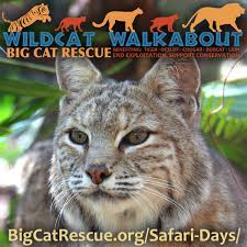 big cat rescue bigcatrescue twitter