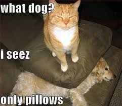 Meme Cats - 10 hilarious memes of the relationship between cats and dogs