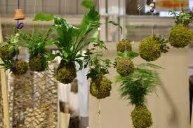 decoration avec des pots en terre cuite tout savoir sur l u0027art du kokedama