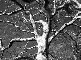 black and white tree eltham palace heritage will668