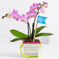 Orchid Flower Pic - orchid plants from proflowers com
