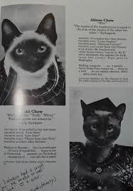 cat high the yearbook uncategorized archives page 2 of 162 give up