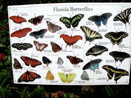 florida native nursery plant city fl native florida butterflies butterflies u0026 birds pinterest