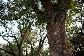 gov abbott wants to put an end to s tree hugging kut