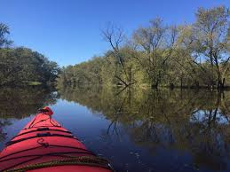 Minnesota Travel Visas images Kayaking the flooded forest unique travel experiences JPG
