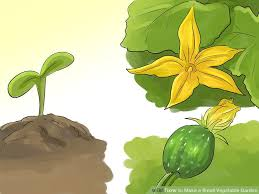 how to make a small vegetable garden with pictures wikihow