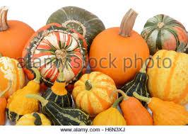 s turban pumpkin and ornamental gourds and pumpkins
