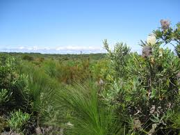 oz native plants my seconded life living and working in oz just another