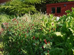 planting naturalistic polycultures in the vegetable garden