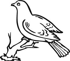 drawing dove cliparts cliparts zone