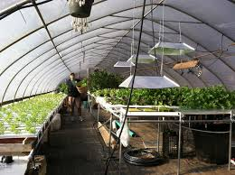 inside greenhouse ideas collection building an indoor greenhouse photos free home