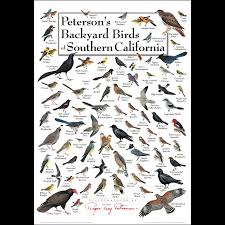 California birds images Peterson 39 s backyard birds of southern california poster earth png
