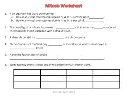 mitosis questions and answer key by nidhi gadura tpt