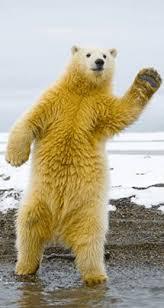 Dancing Bear Meme - dancing bear gif